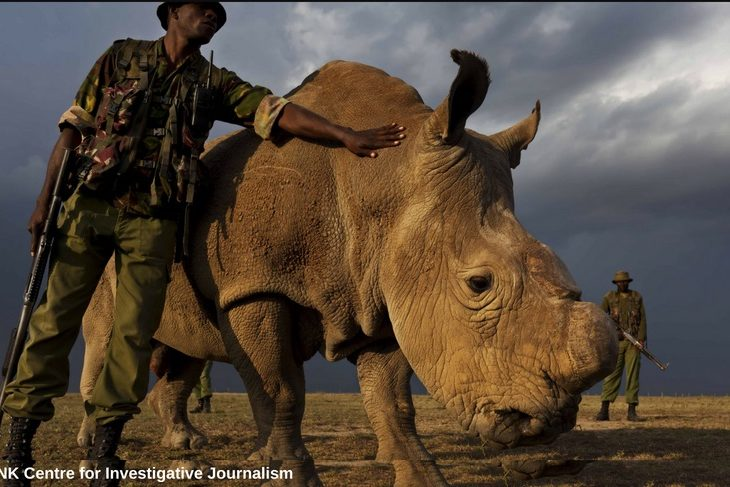 SHOOT TO KILL: BDF stirs tension with its lethal policy on suspected Namibian poachers