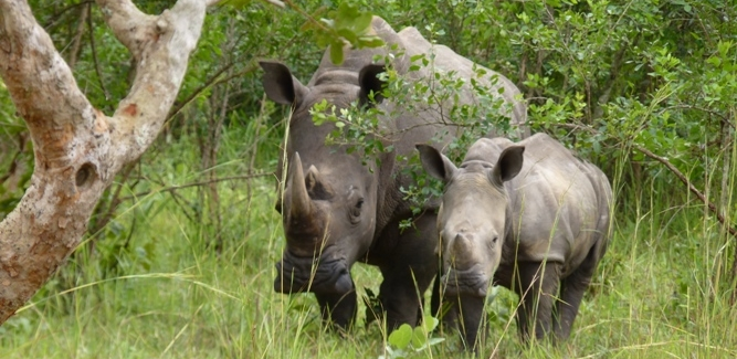 BDF kills two rhino poachers