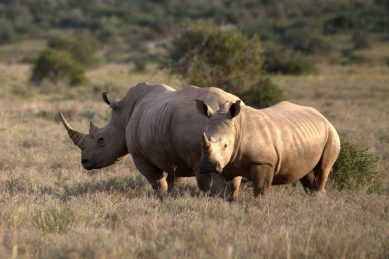 Coronavirus: Poaching fears spread at Wildlife Dept.