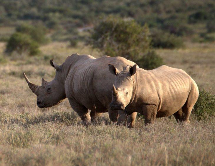 Coronavirus: Poaching fears spread at Wildlife Dept.