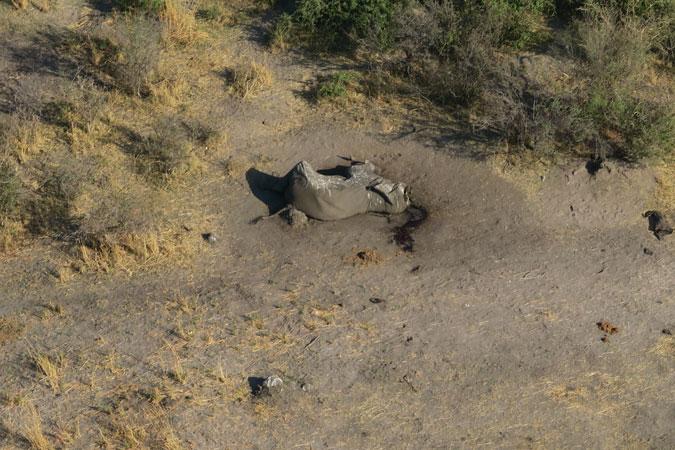 356 elephants die from a mysterious disease in Botswana