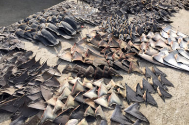 Botswana is landlocked, but is still exporting shark fins