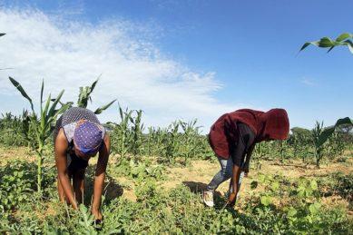 No escape for trafficked Mogobane girls